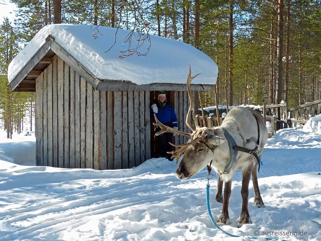 Finnisch Lappland – Rentier im Schnee (ausreisserin.de)