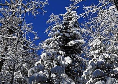Schneebedeckte Bäume und blauer Himmel
