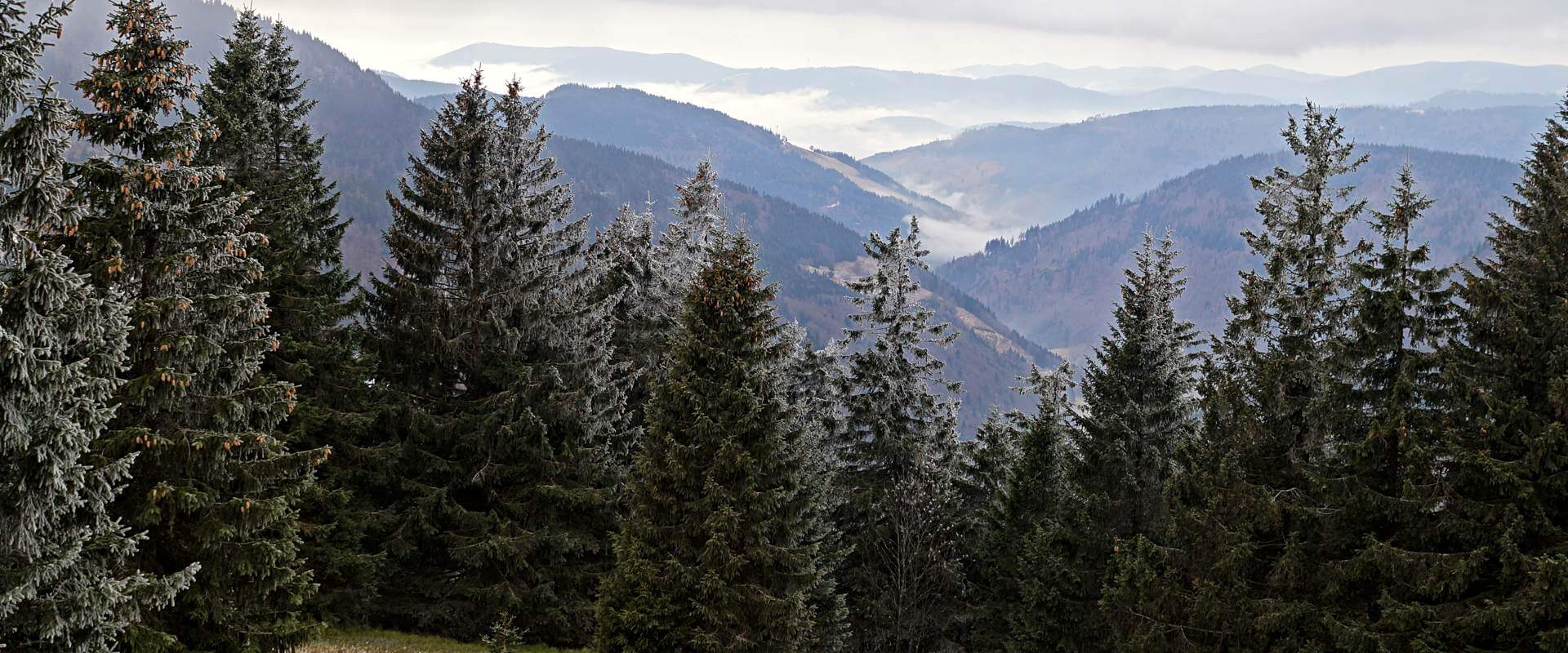 Gengs Linde im Schwarzwald – Genussvoll ins neue Jahr
