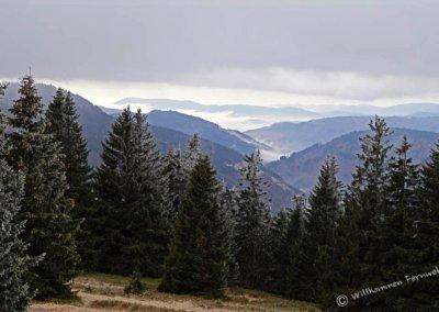 Blick vom Winter-Panoramaweg am Feldberg
