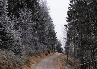 Winter-Panoramaweg am Feldberg, Schwarzwald