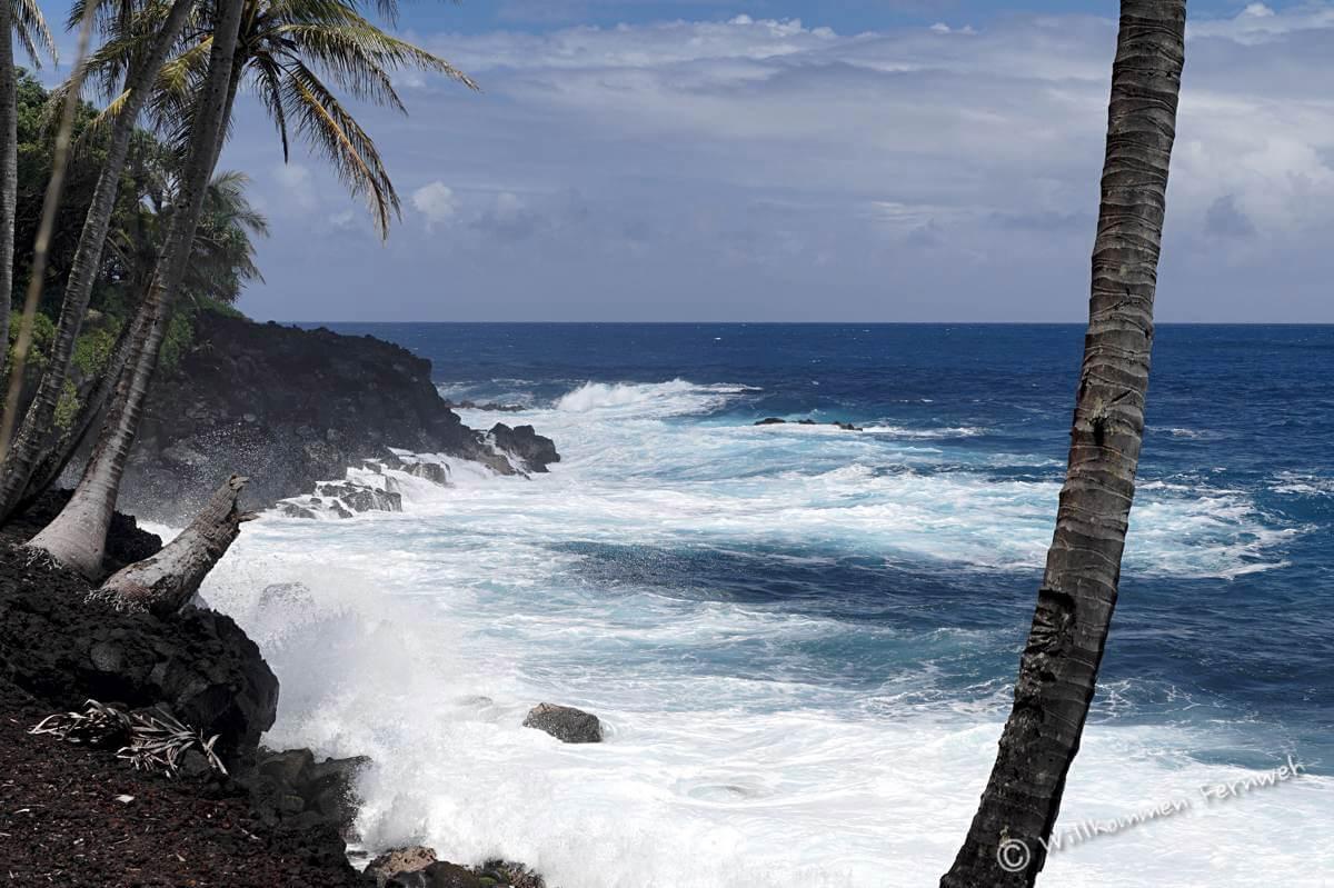 Palmenküste und blaues Meer, Hawaii