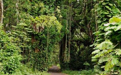Mini-Roadtrip von Honolulu aus: Der Tantalus Scenic Drive