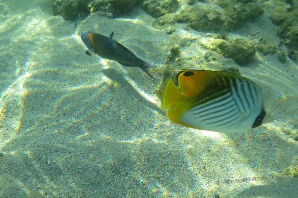 Fische, Kauai
