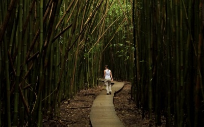 Wasserfälle, Bambuswald und Lavasteppe – Die Rückfahrt von Hana