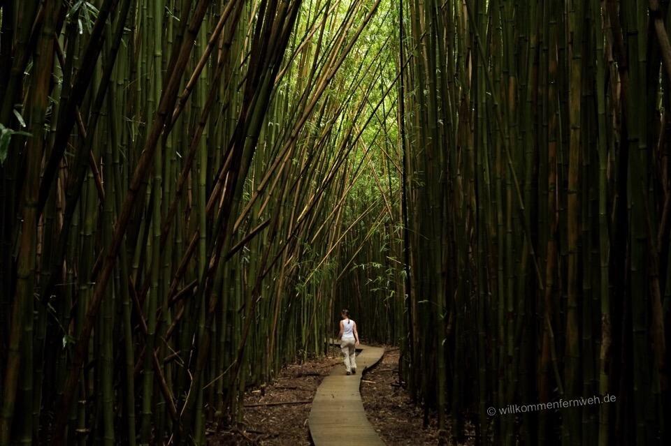 Bambuswald, Pipiwai Trail
