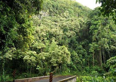 Regenwald nahe Wailua Falls