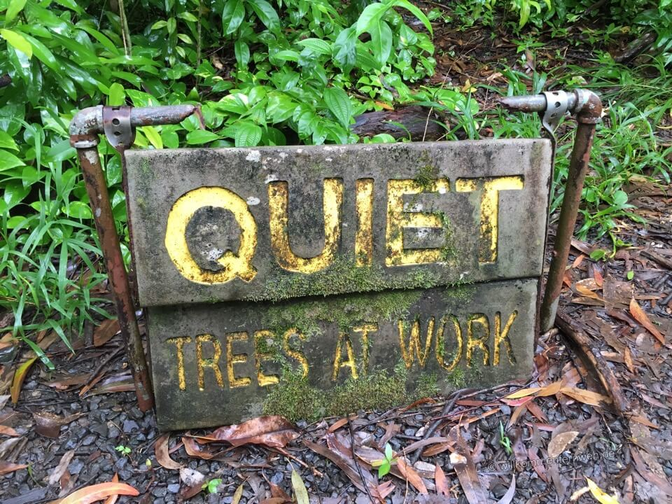 QUIET - Trees at Work, Maui