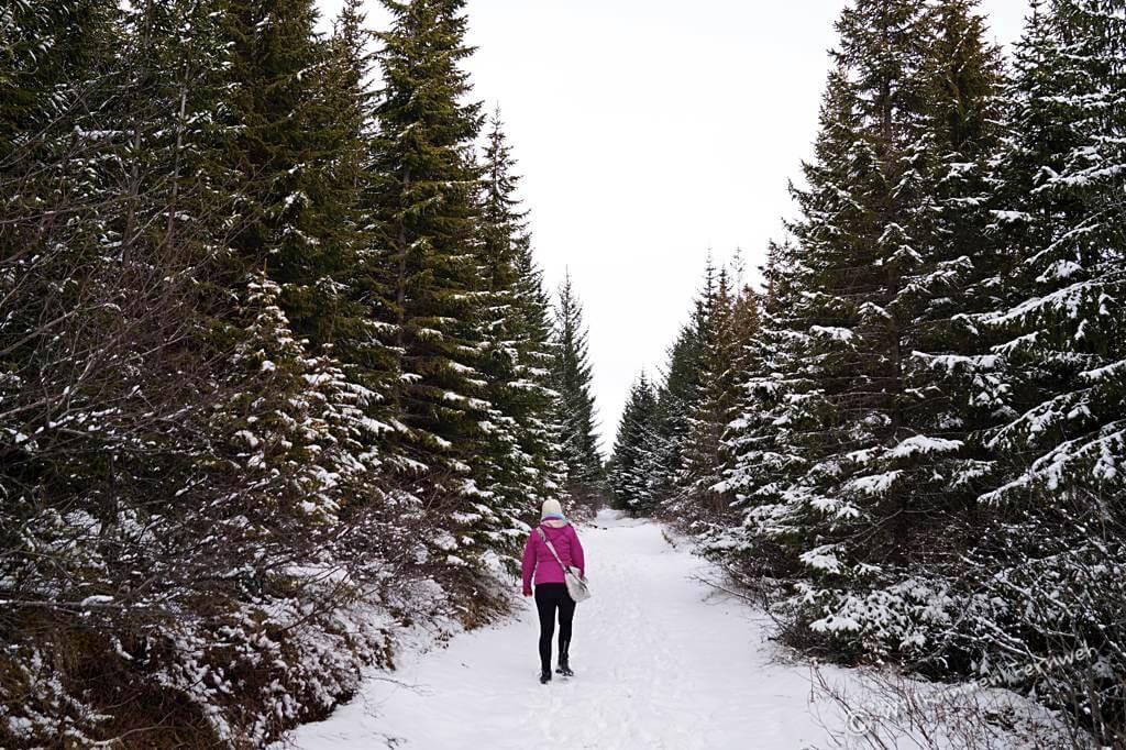 Wanderung im Haukadalsskogur