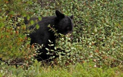 Bärengeschichten – oder: Wovor man sich wirklich fürchten muss