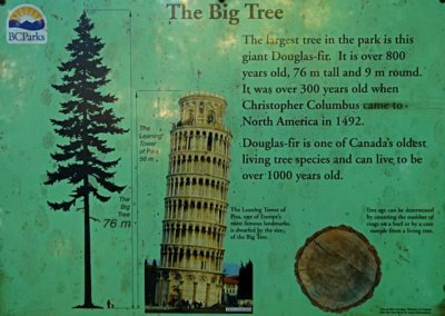 """Veranschaulichung der Größe des """"Big Tree"""""""