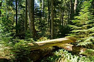 Im Cathedral Grove