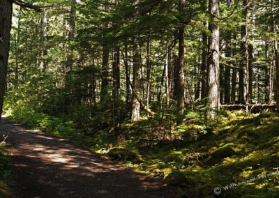 Dichter Wald am Kinney Lake Trail, Mount Robson Provincial Park