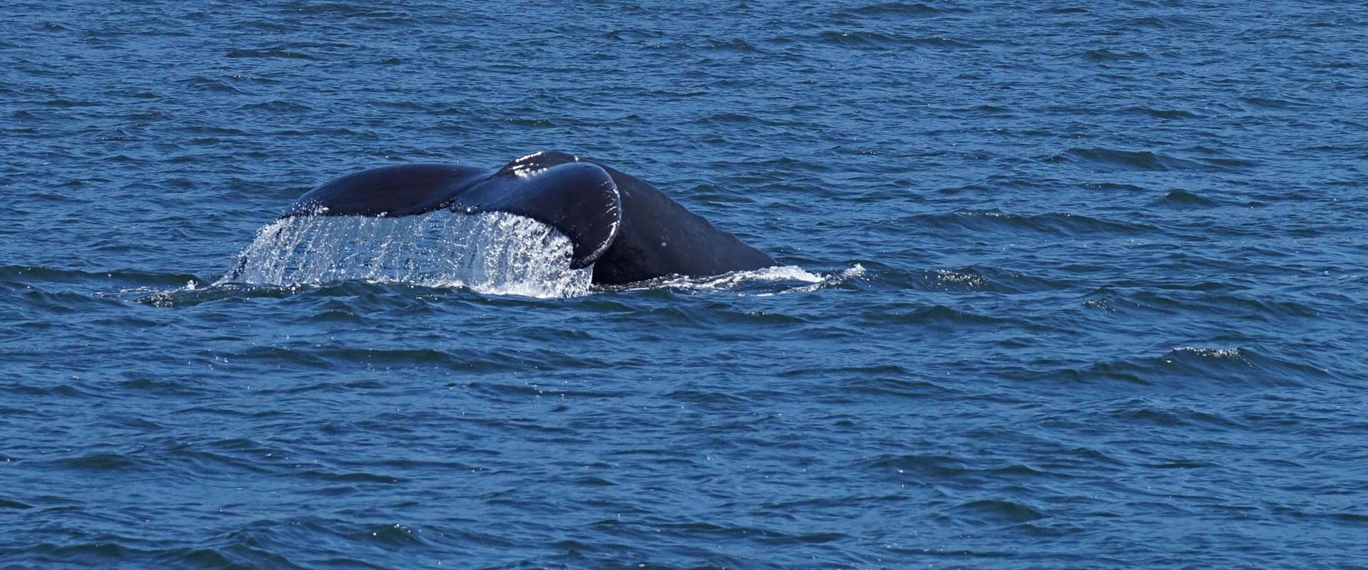 Archipelago Wildlife Cruises – Auf Bootsfahrt im Pacific Rim National Park