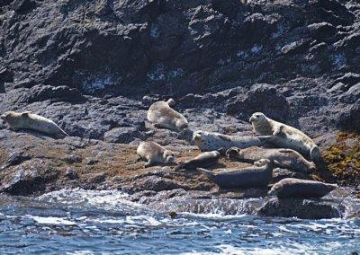 Seehunde beim Sonnenbad