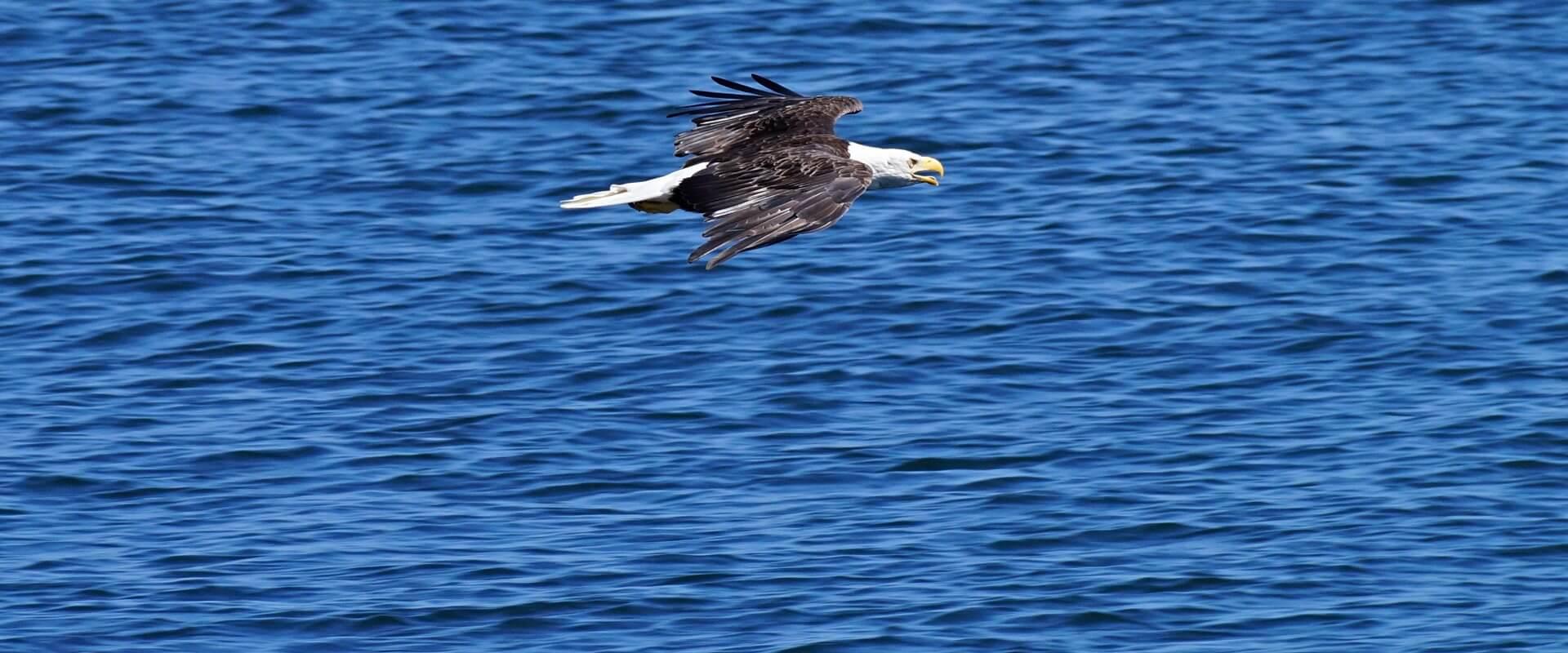 Von Adler bis Ziesel – Tierbegegnungen in Kanadas Südwesten