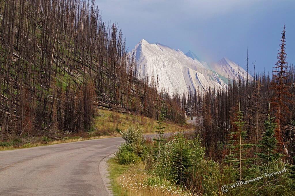 Verbrannte Bäume und Regenbogen auf der Maligne Road