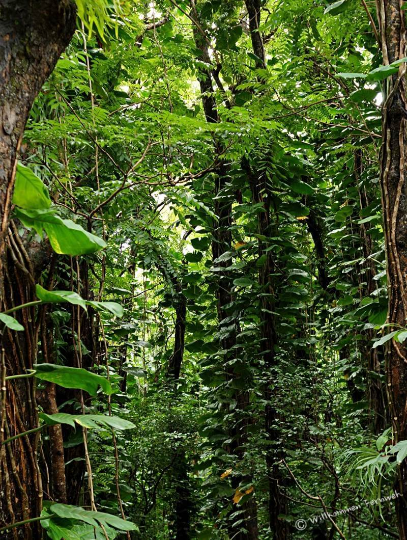 Blick in den Regenwald