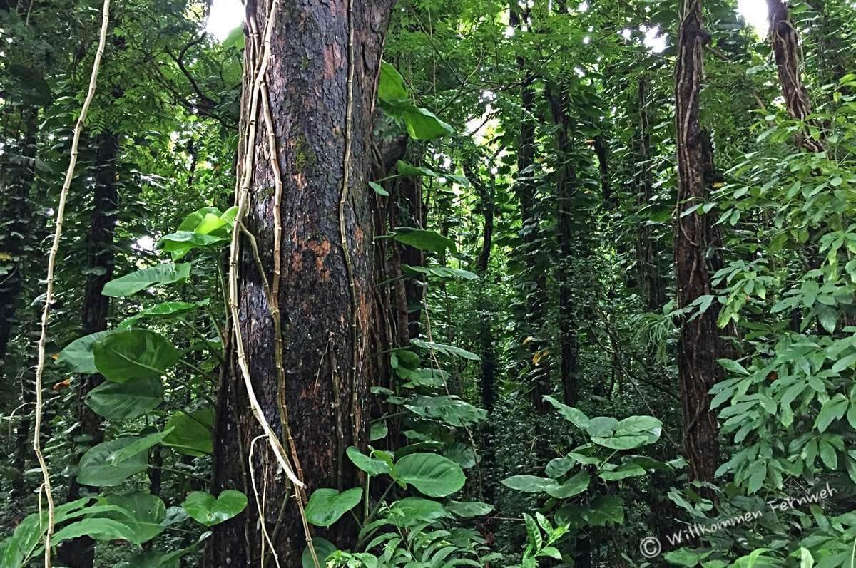 Toller Regenwald direkt neben der Straße