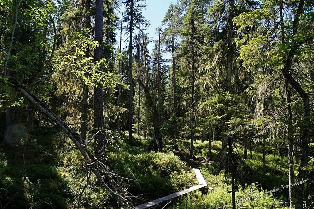 Schmaler Pfad durch den Urwald