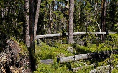 Wildnis, Kultur und Leckereien: Hamra Nationalpark, Fågelsjö und Café Cineast