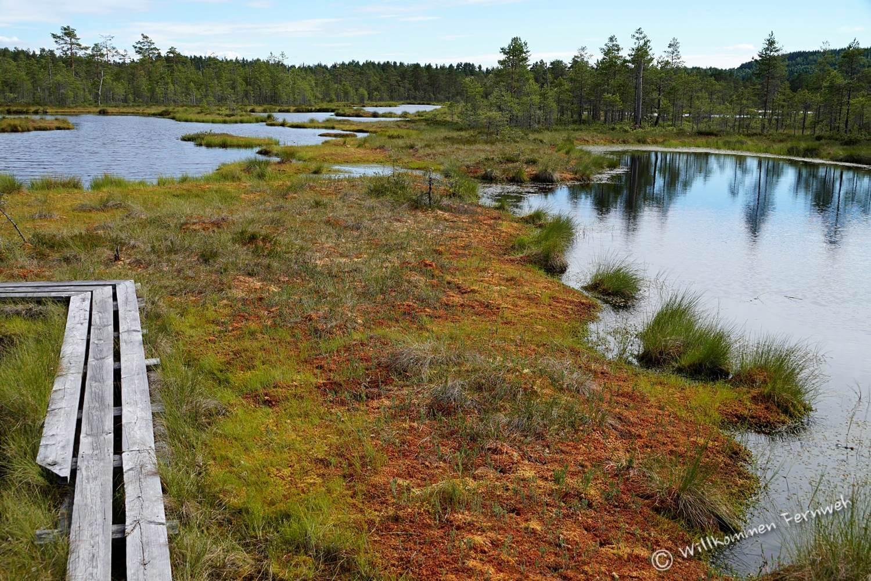 Naturreservat Sumpfgebiet Knuthöjdsmossen