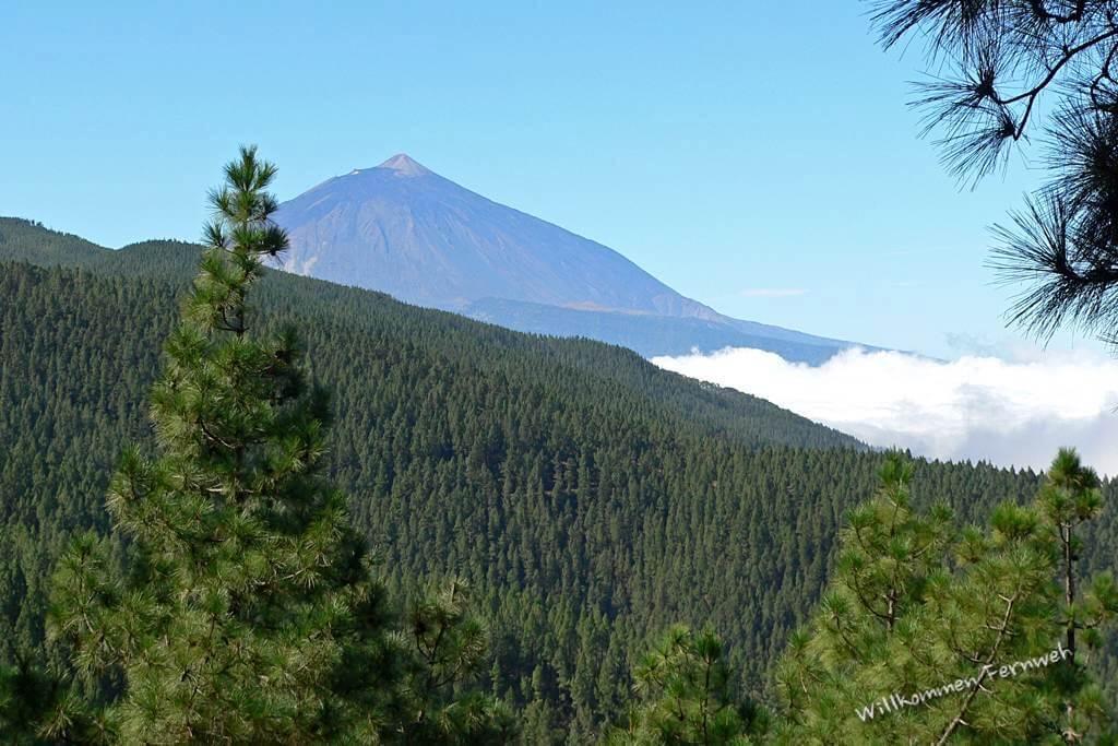 Der Teide auf Teneriffa mit Kiefernwaldgürtel und Wolkenschicht