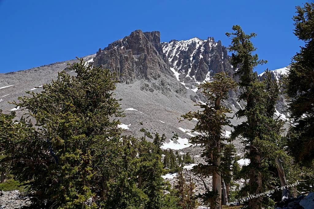 Auf dem Bristlecone / Glacier Trail, Great Basin National Park