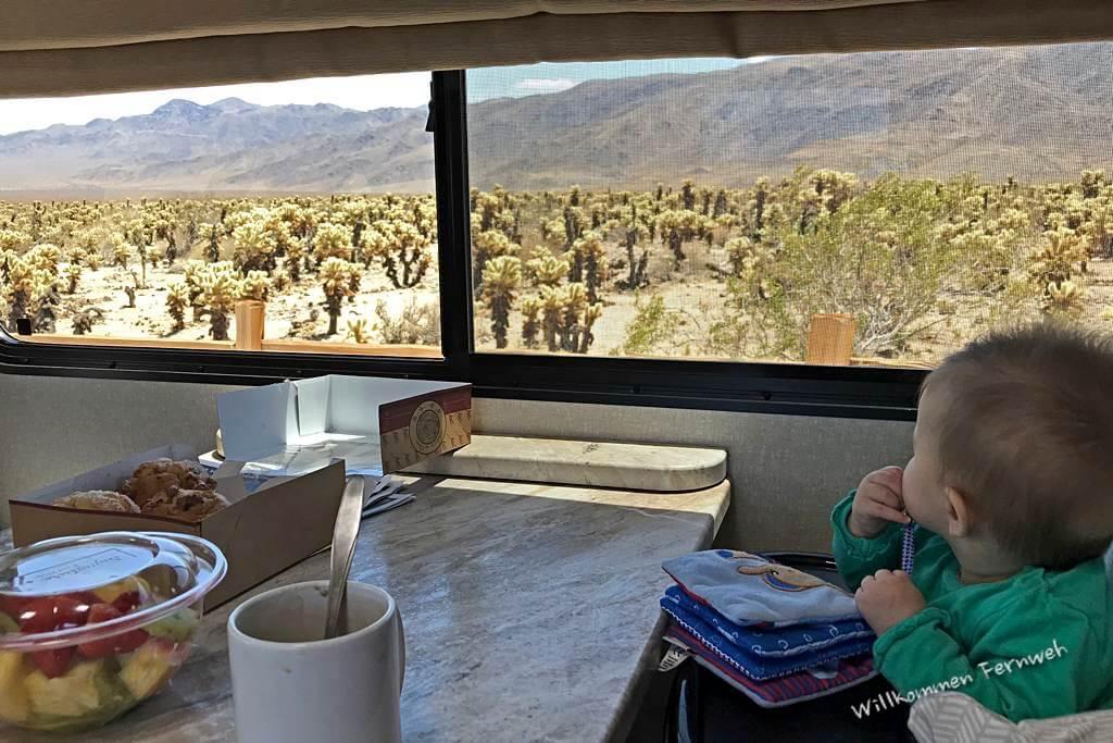 Ein Snack im Wohnmobil mit Blick in den Cholla Cactus Garden, Joshua Tree National Park
