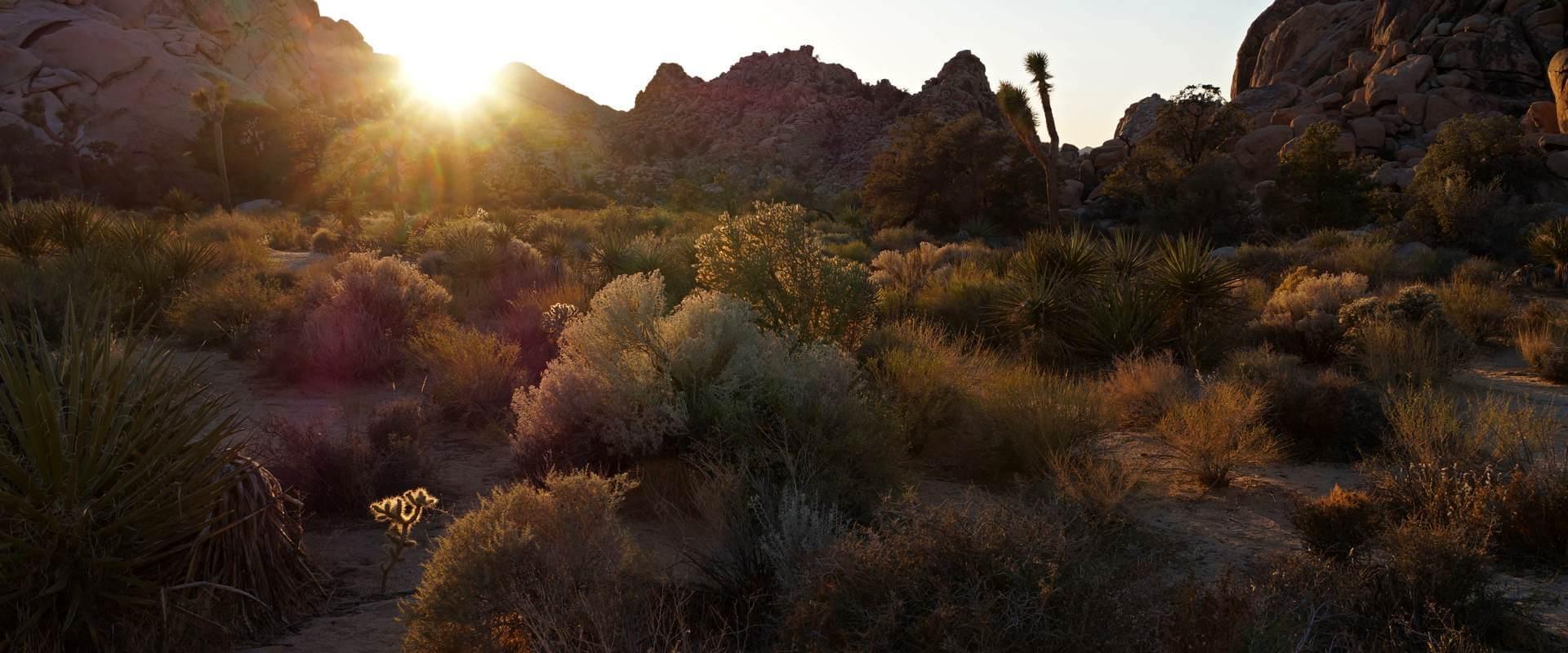 Ein kleines Juwel: Das Hidden Valley im Joshua Tree National Park