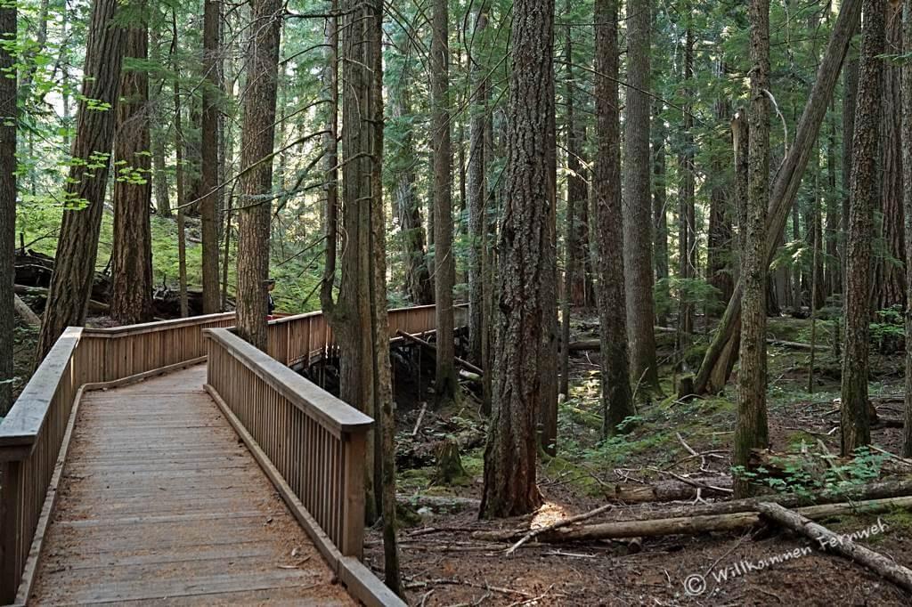 Der Happy Creek Forest Walk