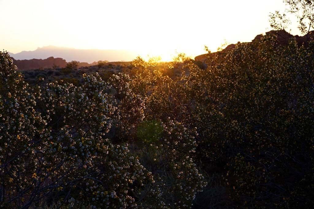 Schöner Sonnenaufgang im Atlatl Rock Campground, Valley of Fire