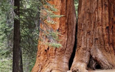 Auf ruhigen Pfaden zum Giant Sequoia National Monument